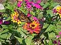 ButterflyOnFlowerInBotanicalGardens.jpg