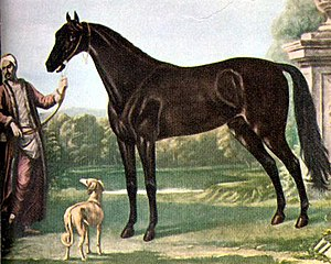 Turkoman horse - The Byerley Turk, one of the progenitors of the Thoroughbred breed, was probably a Turkoman horse