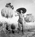 COLLECTIE TROPENMUSEUM Man toont rijstoogst Bali TMnr 10011131.jpg
