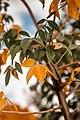 COLORS PLANT.jpg