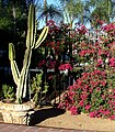 Cactus and Flower Fence 7-7-12 (7598730442).jpg