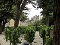 Cahors (47) les vignes derrière le pont.jpg