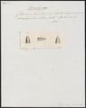 Calamaria brachyorrhos - kop - 1837 - Print - Iconographia Zoologica - Special Collections University of Amsterdam - UBA01 IZ12000235.tif