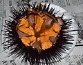 California Sea Urchin (Redondo Beach CA 20140215-0172) 01.JPG