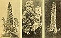 California gardening (1934) (20505857562).jpg