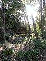 Cami a la Font dels Frares - Riera de Vilalleons - panoramio (5).jpg
