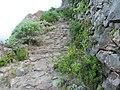 Camino de Taganana al Roque de las Bodegas - panoramio.jpg