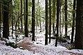 Camp Alice Lk - panoramio.jpg