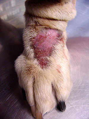 Image Result For Yeast Infection Dogs