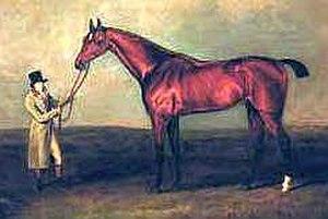 Cardinal Beaufort (horse) - Cardinal Beaufort in a painting by Henry Bernard Chalon, c. 1805.