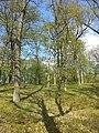 Carex praecox sl34.jpg