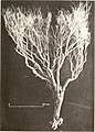 Carnegie Institution of Washington publication (1911) (20542059831).jpg