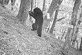 Carnivore camera Wildlife photos from the Wild Rogue Wilderness (19102619544).jpg
