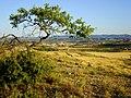 Castelserás - panoramio.jpg