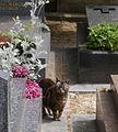 Cat 1 Cimetière de Montmartre-2.jpg