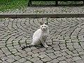 Cat in Gülhane Park, İstanbul.jpg