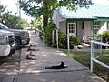 Cats, Cats, and More Cats outside the Seafood Restaurant.jpg