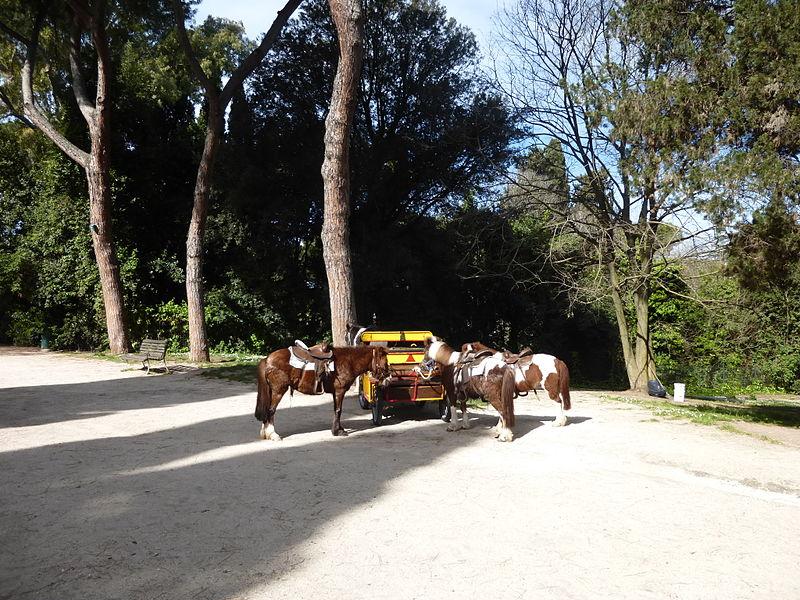 Celio - Parco degli Scipioni i poneys P1000540.JPG