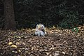 Central Park, New York, United States (Unsplash kKsbR BGwlE).jpg