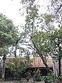 Chùa Vĩnh Nghiêm - Yên Dũng - Bắc Giang - panoramio (96).jpg