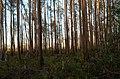 Charlton County, GA, USA - panoramio (5).jpg