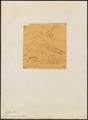 Chelidon nipalensis - 1854 - Print - Iconographia Zoologica - Special Collections University of Amsterdam - UBA01 IZ16700199.tif