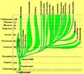 Chelonia albero genealogico.png