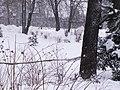 Chotkovy sady - panoramio (9).jpg