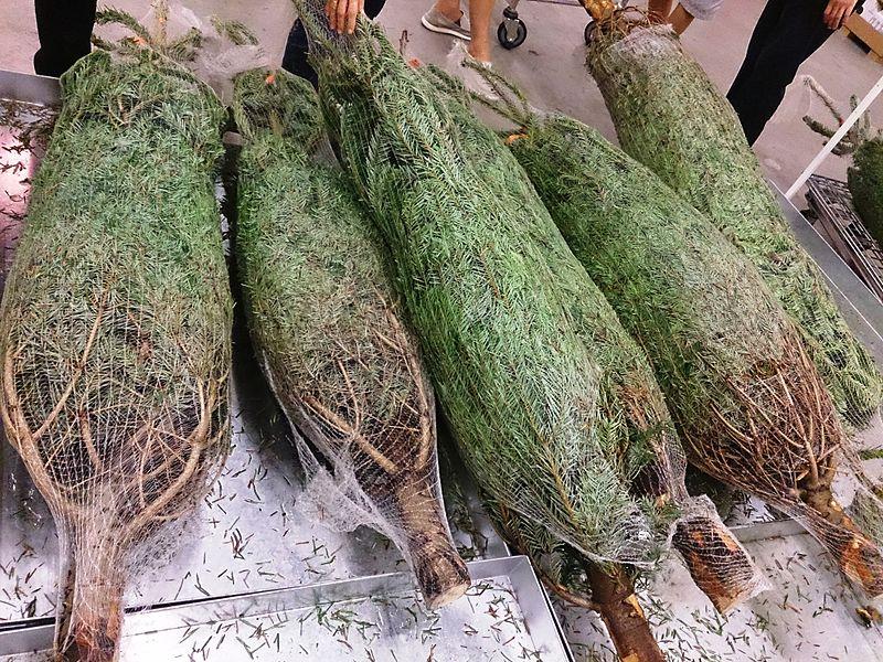File:Christmas tree for sale.jpg