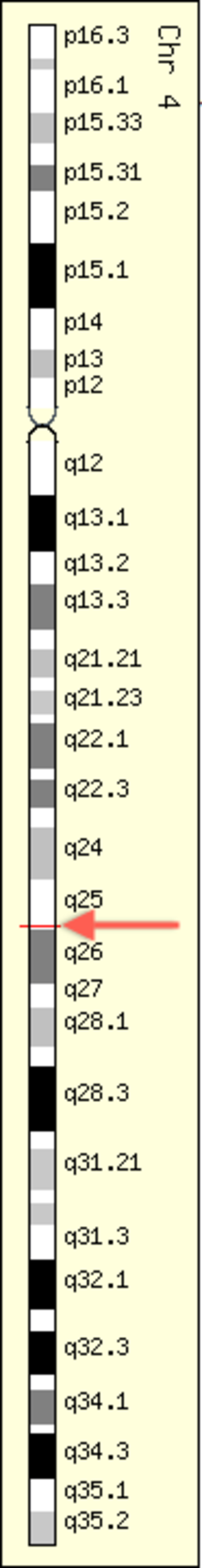 GeneCards - GeneCards showing C4orf21 Gene in genomic location: bands according to Ensembl, locations according to GenLoc. Red band indicates c4orf21 location (red arrow added for clarification).