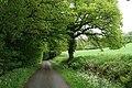 Churchstanton, lane to Biscombe - geograph.org.uk - 173467.jpg