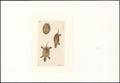 Cistudo europaea - 1753-1834 - Print - Iconographia Zoologica - Special Collections University of Amsterdam - UBA01 IZA1000182.tif