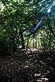 City of London Cemetery inside yew copse 3.jpg