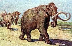 Columbian mammoth TFA.jpg