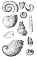 Conchological Manual Plate 23.png