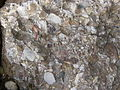 Conglomerate.2487.JPG