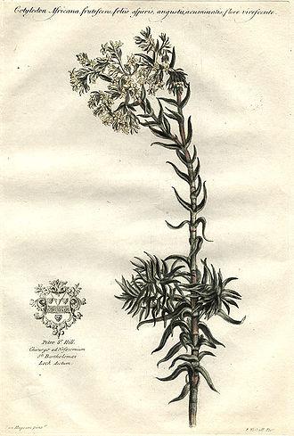 John Martyn (botanist) - Image: Cotyledon africana 00