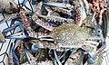 Crabs, cox's bazar .jpg