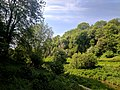 Creswell Gorge, Creswell Craggs, Notts (63).jpg