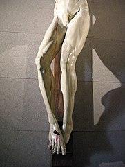 Crocifisso_di_brunelleschi,_1410-15_07.JPG