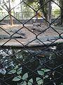 Crocs in zoo.jpg
