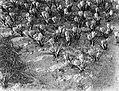 Crocussen, Bestanddeelnr 189-0285.jpg