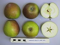 Cross section of Barnack Beauty, National Fruit Collection (acc. 1957-207).jpg