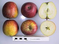 Cross section of Blahova Reneta, National Fruit Collection (acc. 1974-201).jpg