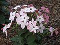 Cute flowers (1).jpg