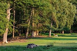 Dülmen, Wildpark -- 2020 -- 7842.jpg