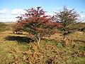 Dartmoor, Holne Moor - geograph.org.uk - 1015710.jpg