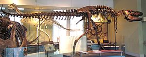 Daspletosaurus - D. torosus holotype specimen CMN 8506 (the mount is a composite that also includes other individuals), Canadian Museum of Nature