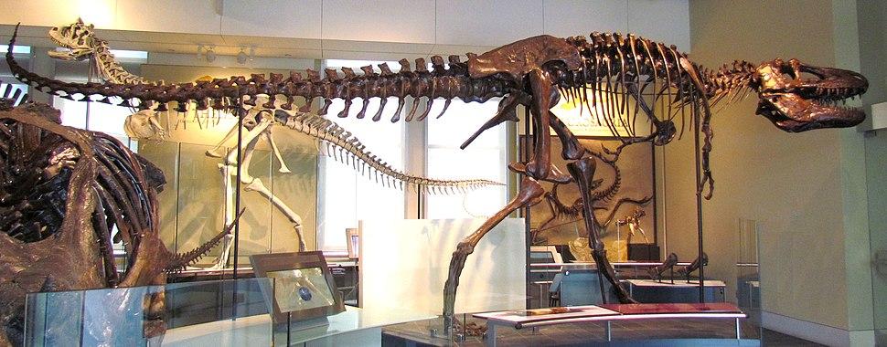 Daspletosaurus torosus, Ottawa