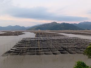 Aquaculture in China - Dayu Bay, Cangnan County, Zhejiang
